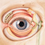 Galerie-Auge-Illustration-Medical-Art-&-More