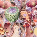 Galerie_Illustration-Medical-Art-&-More_001