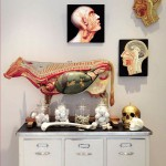 Galerie_Kuh-Objekt-Medical-Art-&-More