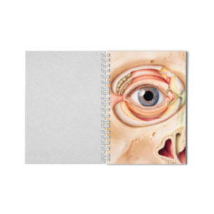 College-Block Auge_Medical Art and More